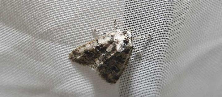dezinsectie molii