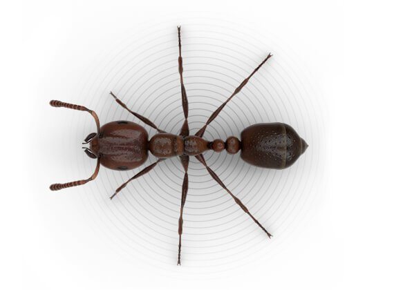 dezinsectie furnici bucuresti